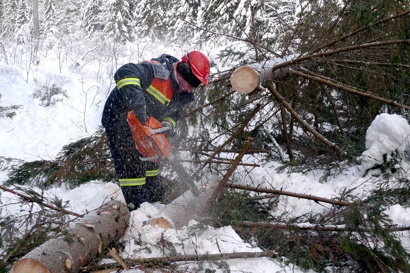 для детей работа по вырубке леса вакансии даже