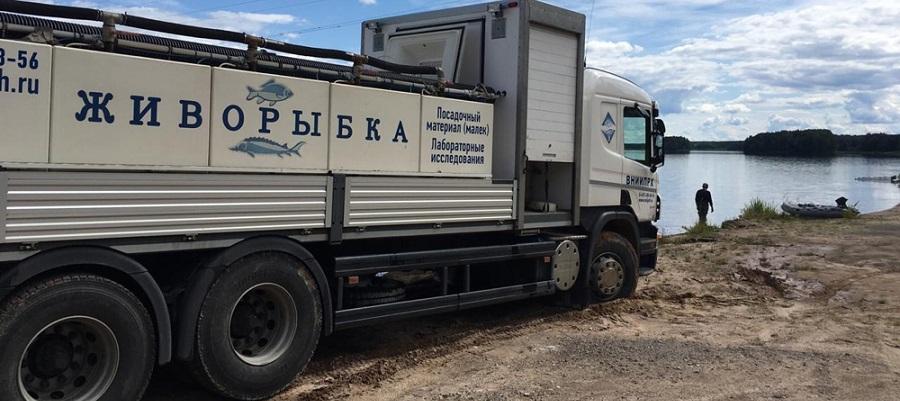 Транснефть – Диаскан выпустила 1,7 тыс. штук молоди стерляди в Угличское водохранилище на р. Волга