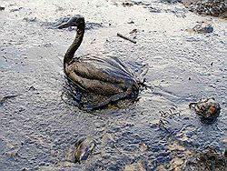 BP Begins 'Static Kill' Operation to Seal Well for Good