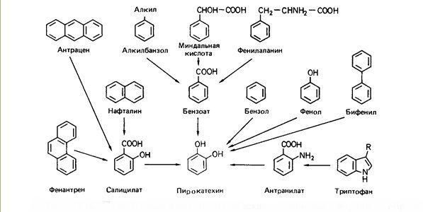 Производство  и применение ароматических углеводородов