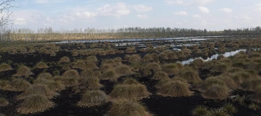 Торф северных болот может использоваться для сбора нефти при разливах