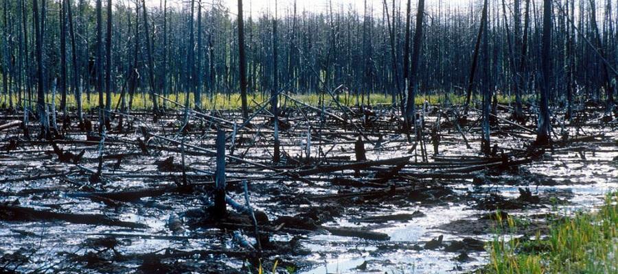5 уголовных дел. На Ямале выявлены факты масштабного загрязнения лесов нефтепродуктами