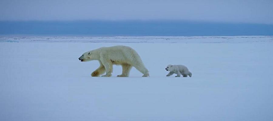 Роснефть провела первую в 2021 г. экспедицию по изучению белых медведей