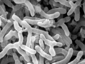 Биологи из Перми придумали как очищать почву от нефти с помощью бактерий