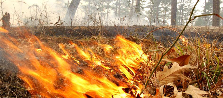 Лесные пожары в Бурятии осложняют ремонт поврежденной ЛЭП