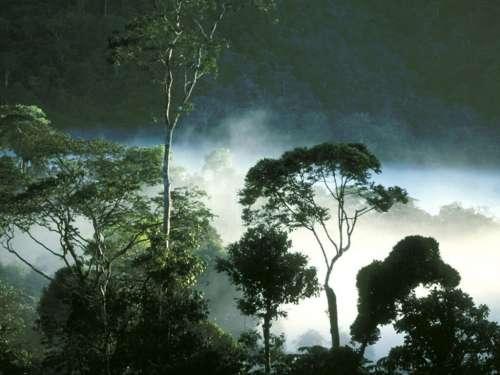 Rainforest treaty 'fatally flawed'