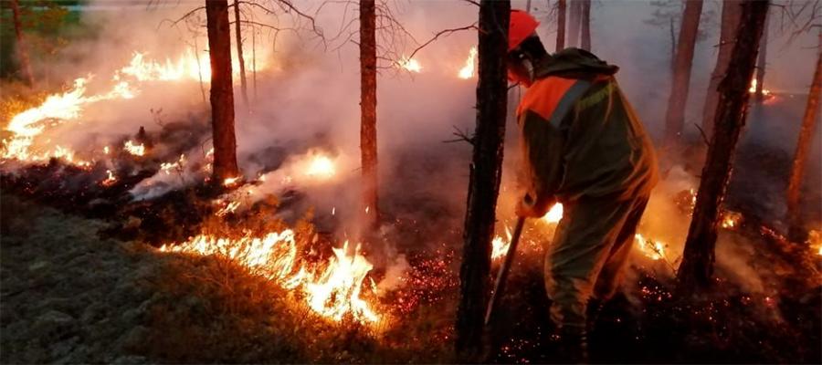 Рослесхоз: ущерб от лесных пожаров составил 7 млрд руб.