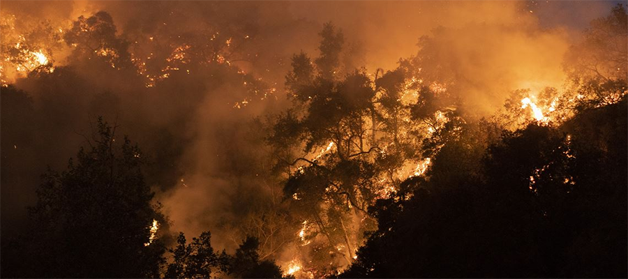 Лесные пожары в США нарастают. Chevron поможет в ликвидации последствий бедствия в шт. Калифорния
