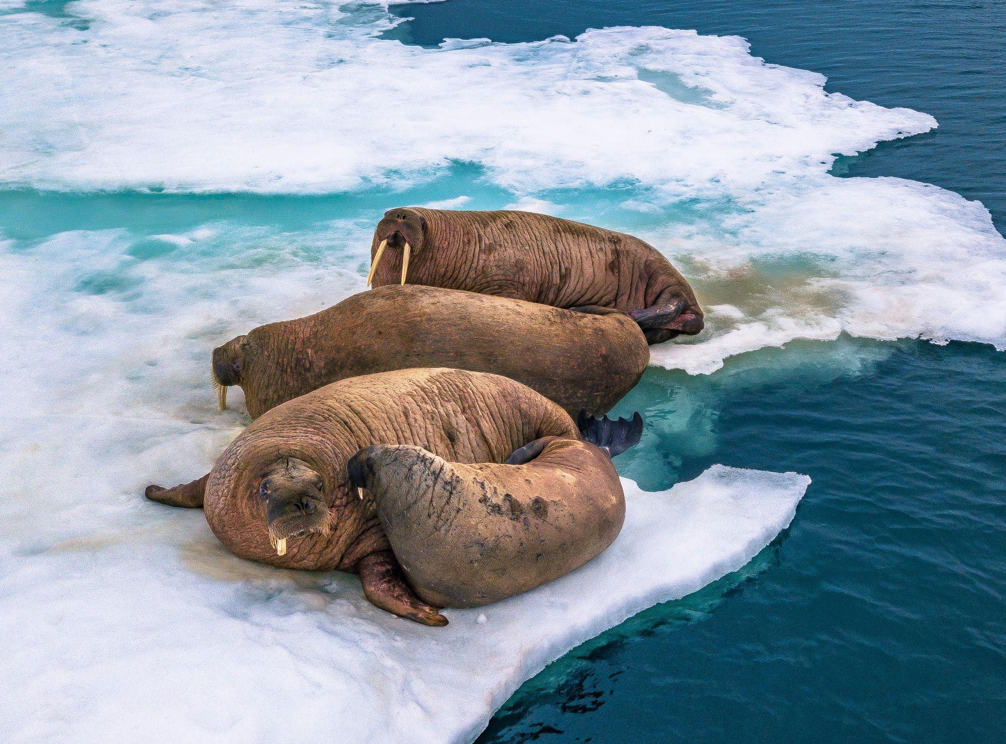 Арктика-05.jpg