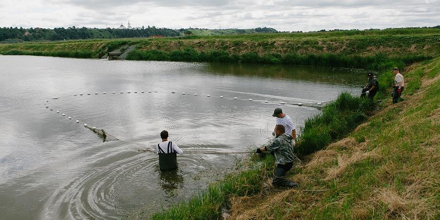 Облов рыб в выростных прудах Абалакского экспериментального рыборазводно....jpg