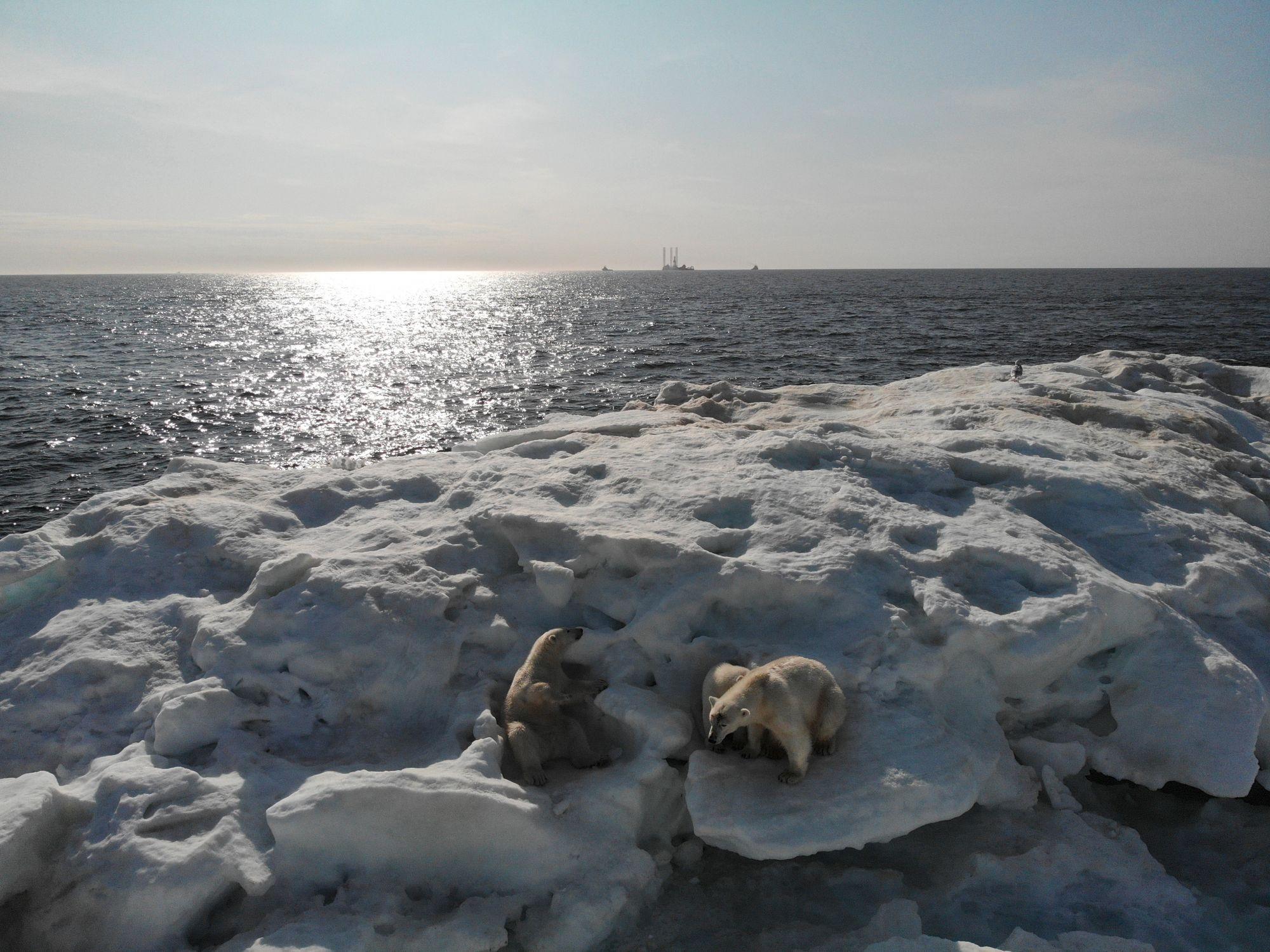 Арктика-04.jpg