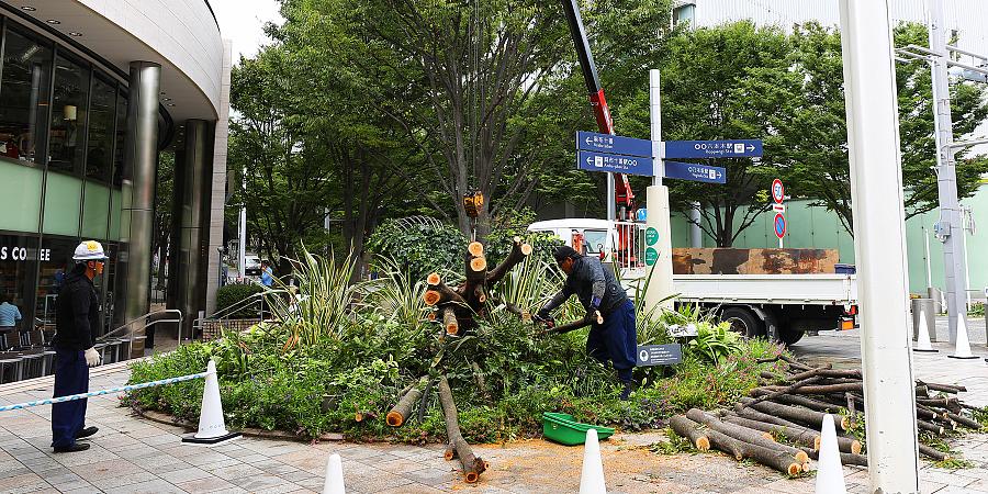 В пригороде Токио порядка 0,5 млн домов остались без электроснабжения из-за тайфуна