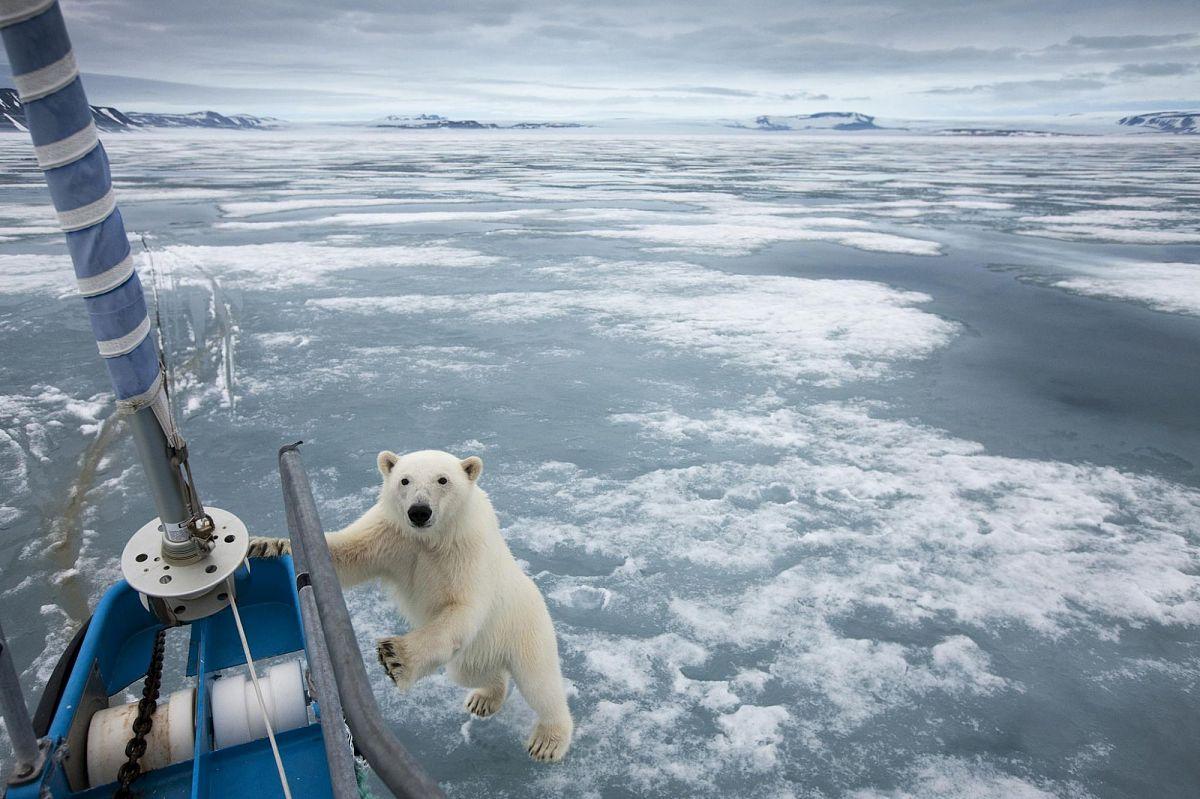 Освоение Арктики: проблемы и решения